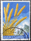 SAN MARINO - CIRCA 1958: A stamp printed in San Marino shows spikes, circa 1958 — Stock Photo