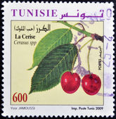 TUNISIA - CIRCA 2009: A stamp printed in Tunisia shows cherries, circa 2009 — Stockfoto