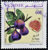 TUNISIA - CIRCA 2009: A stamp printed in Tunisia shows ficus carica, circa 2009 — Stock Photo