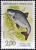 FRANCE - CIRCA 1990: A stamp printed in France shows a rutilus rutilus, circa 1990 — Stock Photo