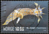 NORWAY - CIRCA 2006: A stamp printed in Norway shows Polycera quadrilineata, circa 2006 — Stock Photo