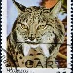 Iberian lynx — Stock Photo #8692866