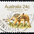 "Stock Photo: AUSTRALI- CIRC1981: Stamp printed in AUSTRALIshows image of Thylacine (TasmaniTiger) with description ""Endangered Species"", circ1981"