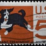 Mongrel dog, humane treatment of all animals — Stock Photo
