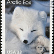 An arctic fox — Stock Photo #9188830