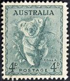 Carimbo impresso pela austrália, mostra o coala — Foto Stock