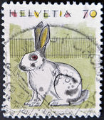 A stamp printed in Switzerland shows the Rabbit — Stock Photo