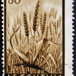 ARGENTINA - CIRCA 1954: A stamp printed in Argentina shows golden ears of wheat, circa 1954 — Stock Photo