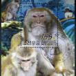 Stock Photo: NORTH KORE- CIRC2004: stamop printed in DPR Koreshows macaque, circ2004