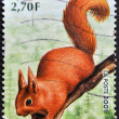 FRANCE - CIRCA 2001: A stamp printed in France shows a squirrel, circa 2001 — 图库照片