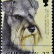 Stock Photo: GUERNSEY - CIRC2001: stamp printed in Guernsey shows dog, miniature schnauzer, circ2001