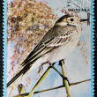 EQUATORIAL GUINEA - CIRCA 1979: A stamp printed in Equatorial Guinea shows a white Wagtail, circa 1979 — Foto Stock