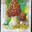 HUNGARY - CIRCA 1984: A stamp printed by Hungary shows mushroom, morchella esculenta, circa 1984 — Stock Photo