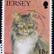 JERSEY - CIRCA 1994: A stamp printed in Jersey shows a cat, maine coon, circa 1994 - Stock Photo
