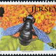 Stock Photo: JERSEY - CIRC2008: stamp printed in Jersey shows carpenter bee, xylocapviolacea, circ2008