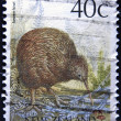 NEW ZEALAND - CIRCA 1988: A stamp printed in New Zealand shows Brown Kiwi, Apteryx australis, circa 1988 — Stock Photo