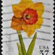 UNITED STATES - CIRCA 1999: A stamp printed in USA shows Daffodil, circa 1999 — Stock Photo