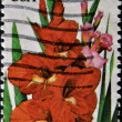 UNITED STATES - CIRCA 1994: stamp printed in USA shows flower, Gladiola, circa 1994 — Stock Photo