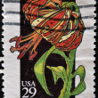 Stock Photo: UNITED STATES - CIRC1994: stamp printed by United states, shows flower,turk´s cap lily, circ1994