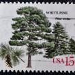 US- CIRC1978 : stamp printed in USshows White Pine (Pinus Strobus), circ1978 — Stock Photo #9446035