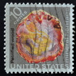 US- CIRC1974: stamp printed in USshows petrified wood, mineral heritage, circ1974 — Stock Photo #9446053