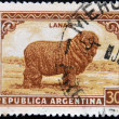 ARGENTIN- CIRC1935: stamp printed in Argentinshows merino wool, circ1935 — Stock Photo #9448830