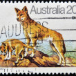 Stock Photo: AUSTRALIA - CIRCA 1980: A stamp printed in Australia shows Australian Dingo Dog, circa 1980