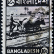 BANGLADESH - CIRCA 1973: A stmp printed in Bangladesh shows farmer plowing a rice field on the Bulls, circa 1973 — Stock Photo