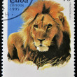 CUBA-CIRCA 1995: A stamp printed in the Cuba shows lion panthera leo, circa 1995 — Stock Photo