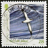 ISLE OF MAN - CIRCA 2006: A stamp printed in isle of man shows shearwater, puffinus puffinus, circa 2006 — Stock Photo