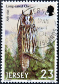 JERSEY - CIRCA 2001: A stamp printed in Jersey shows an asio otus, circa 2001 — Стоковое фото
