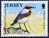 JERSEY - CIRCA 2007: A stamp printed in Jersey shows a bird, Northern Wheathear, Oenanthe Oenanthe, circa 2007 — Photo