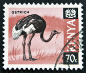 KENYA - CIRCA 1969: A stamp printed in Kenya shows an ostrich, circa 1969 — Stock Photo