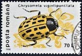 Roemenië - circa 1996: chrysomela vigintipunctata, circa 1996 een stempel gedrukt door roemenië, weergeven. — Stockfoto