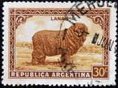 ARGENTINA - CIRCA 1935: A stamp printed in Argentina shows merino wool, circa 1935 — Stock Photo