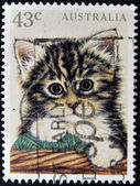 AUSTRALIA - CIRCA 1991: A stamp printed in Australia shows image of a kitten, circa 1991 — Stock Photo