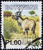 ботсвана - около 2002: марку, напечатанную в ботсване показывает образ более kudus, около 2002 — Стоковое фото