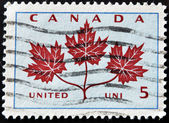 CANADA - CIRCA 1964: A stamp printed in Canada shows Maple Leaf, circa 1964 — Stock Photo