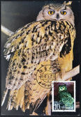 CHINA - CIRCA 1985: A postcard printed in China shows an owls, circa 1985 — Stockfoto