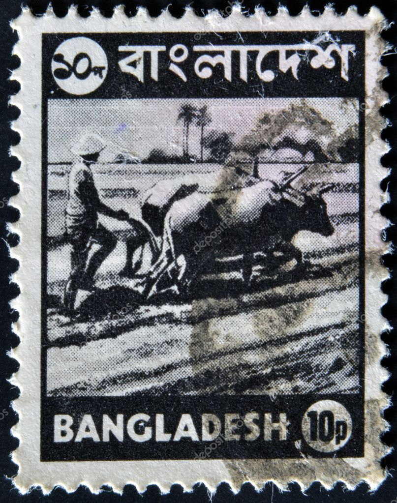 BANGLADESH - CIRCA 1973: A stmp printed in Bangladesh shows farmer plowing a rice field on the Bulls, circa 1973 — Stock Photo #9449003