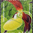 FRANCE - CIRCA 2005: A stamp printed in rance shows a Cypripedium calceolus orchid, circa 2005 — Stock Photo