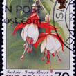 ISLE OF MAN - CIRCA 1998: A stamp printed in Isle of Man shows fuchsia, lady thumb, circa 1998 — Stock Photo