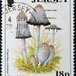 Stock Photo: JERSEY - CIRC1994: stamp printed in Jersey shows coprinus comatus (shaggy ink cap), circ1994