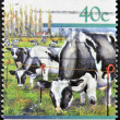 NEW ZEALAND - CIRCA 1997: A stamp printed in New Zealand shows cattle grazing, Holstein - Friesian, circa 1997 — Stock Photo #9450871