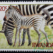 RWANDA - CIRCA 1984: A stamp printed in Rwanda shows two zebras, circa 1984 — Stock Photo