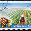ROMANI- CIRC1982: stamp printed in Romanidedicated to viticulture, circ1982 — Stock Photo #9451197