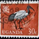 UGANDA - CIRCA 1965: A stamp printed in Uganda shows Sacred Ibis, circa 1965 — Stock Photo