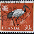 UGANDA - CIRCA 1965: A stamp printed in Uganda shows Sacred Ibis, circa 1965 — Stock Photo