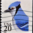 UNITED STATES OF AMERICA - CIRCA 1996: A stamp printed in USA shows Blue Jay Bird, circa 1996 — Stock Photo
