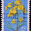 UNITED STATES OF AMERIC- CIRC1979: stamp printed in United States of Americshows contrcostwallflower, Endangered Flora, circ1979 — Stock Photo #9451806